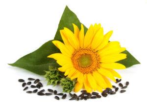 купить семечки в Москве калиброванные и отборные семечки разных сортов